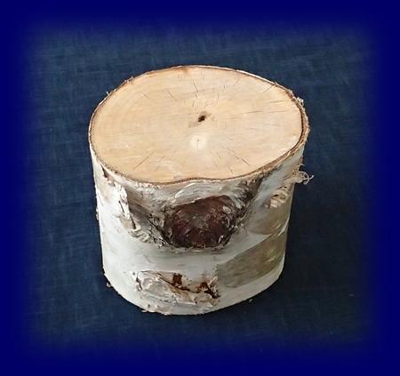 シラカバの切り株 自然物やネイチャーコーナー用小物