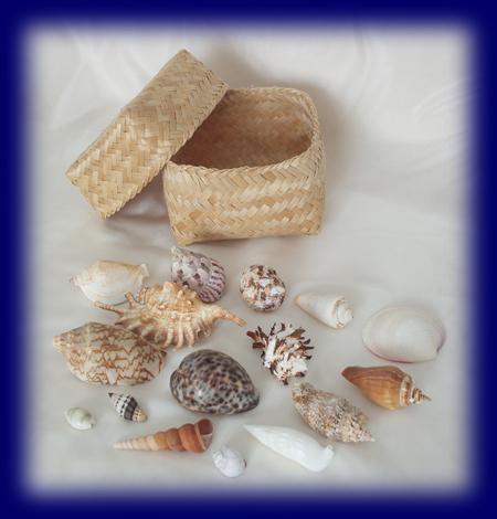 色々貝がら 貝殻 おままごと シェル おもちゃ 幼児教育