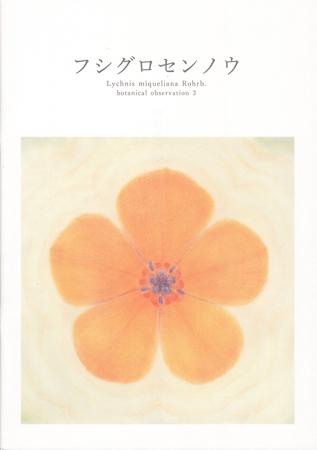 フシグロセンノウ Lychnis miqueliana Rohrb. botanical obserbation3 描く 本